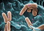 pengaruh pembekuan pada mikroorganisme