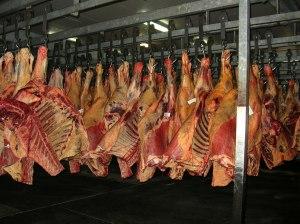 penyimpanan daging sapi beku