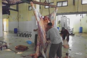 teknik penyimpanan daging sapi beku