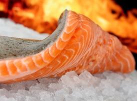 ikan salmon beku